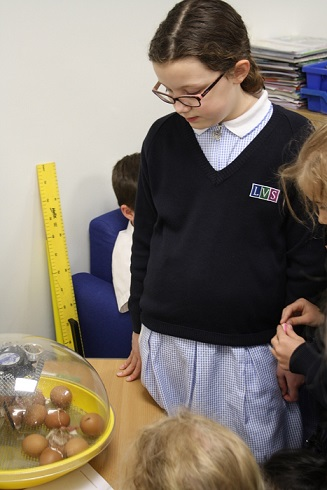 25.04.16. LVS Ascot pupils avidly watch the hatching process ed